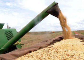 colheita agricola